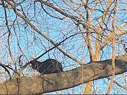 cat in tree rescue