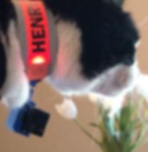 Pet camera on collar tulip side view.jpg