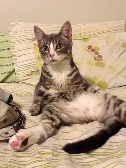 Lost cat found in Miami Florida