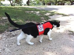 Henry Search Cat Channel art.jpg
