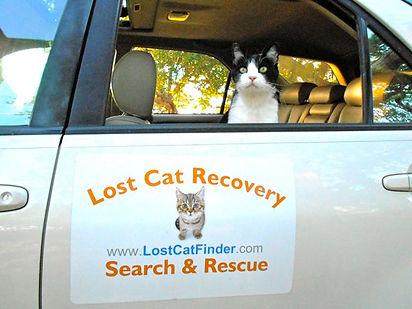 Lost Cat Search & Rescue cat