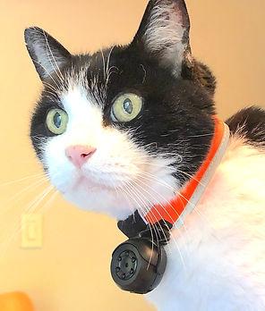 the New Kitty Camera.JPG