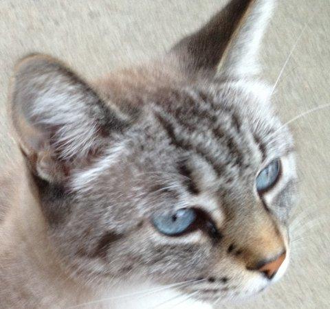 Cat found Sacramento CA
