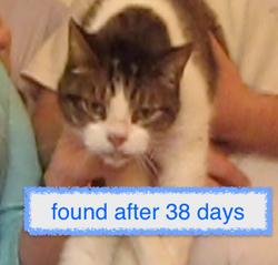 Lost cat found 38 days