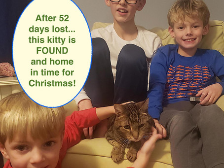 Cat lost 52 days is found in time for Christmas using Lost Cat Finder coaching.