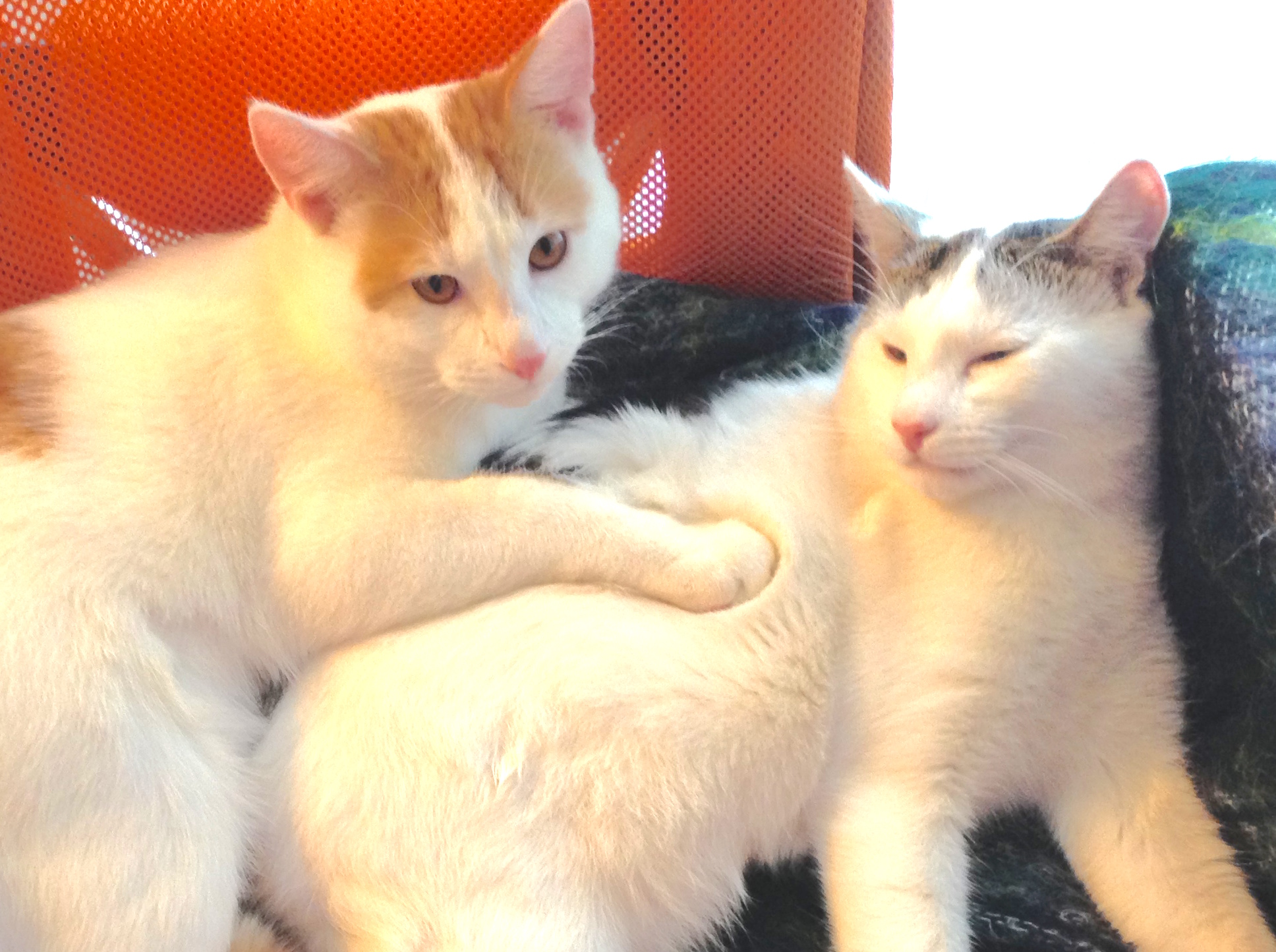 Latvia brothers cats found