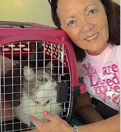 Pet detective finds lost cat IRMA