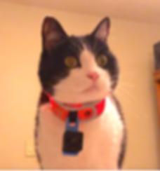 Light up orange cat collar with camera.p