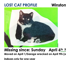 Winston the cat lost 3 months.png