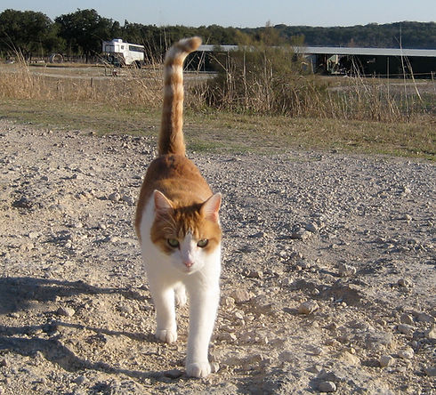 lost found cat