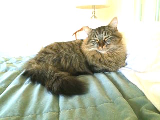 Fiona cat FOUND and lounging pic.jpg
