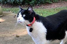 Cat Collar and TRACKer tag.png