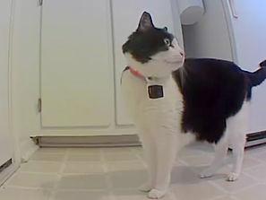 Cat Collar camera mini.jpg