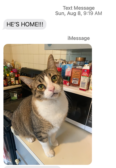 Cat found in Detroit with pet detective coaching.png