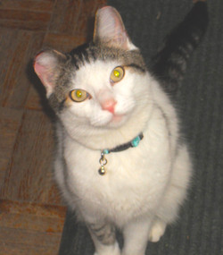 Ray lost cat found in Chicago by pet detective lost cat finder
