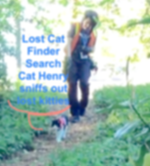 Lost cat finders pet detective team Geor