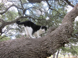 Henry in tree Sept 6.jpg