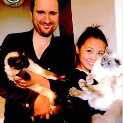 Lost Balinese cat found Toronto