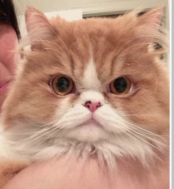 Murphey lost cat found Canada