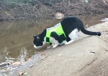 Cat camera on harness adventure cat at c