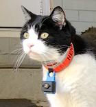 Cat collar camera.png