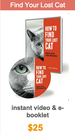 How to Find a Lost Cat book video