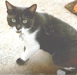 cat lost 2 weeks found by pet detective