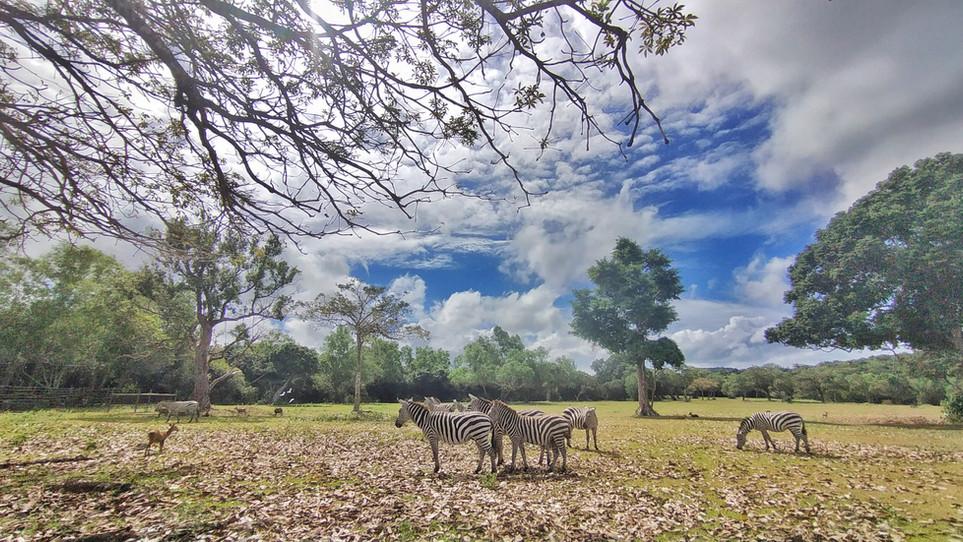 some family of zebra