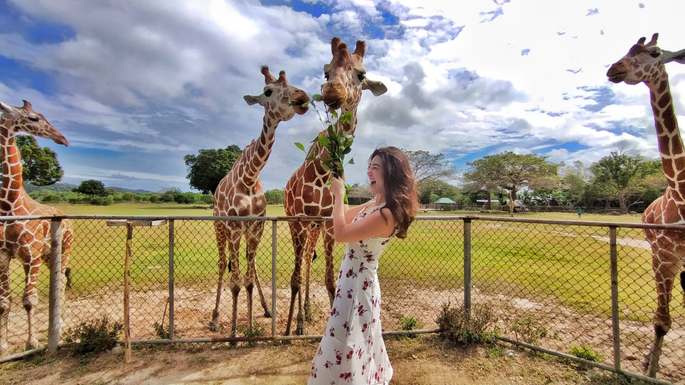 Ms. Chelsea having her best day at Calauit with Giraffes.