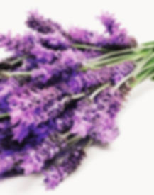 642x361_What_Lavender_Can_Do_for_You.jpg