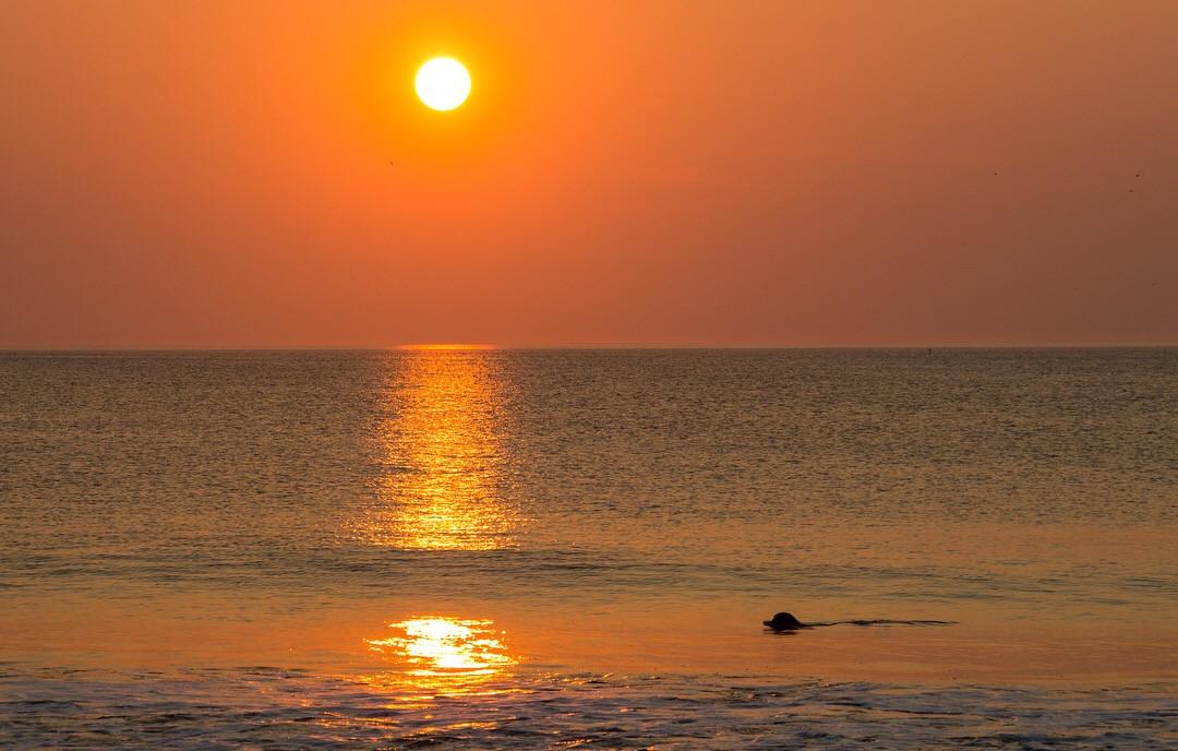 Seal at Sunrise