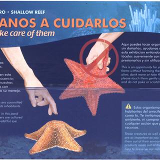 Illustration #4 Illuminated panel Xcaret Aquarium Mexico 2002