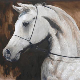 Arabian Horse 100x81cm Oil on canvas Mexico 2012