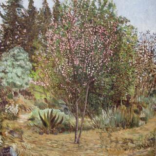 Flowering peach tree 54x74cm Oil on canvas Mexico 2009