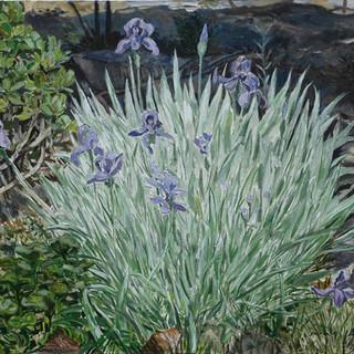 Purple Irises 65x81cm Oil on canvas Mexico 2009