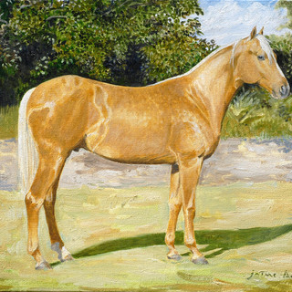 Bayo Horse 46x38cm Oil on canvas Mexico 2012