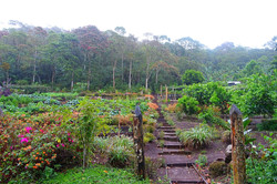 cloud forest garden_edited