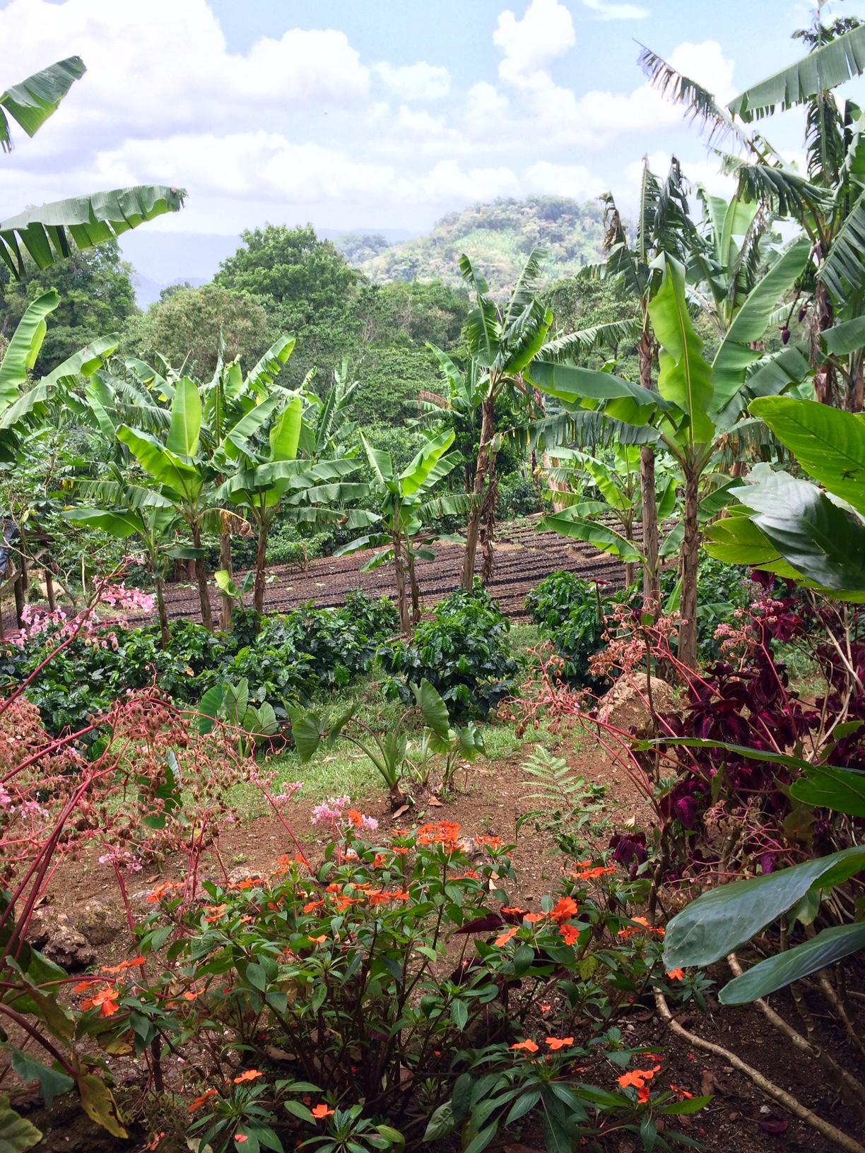 view garden cabin