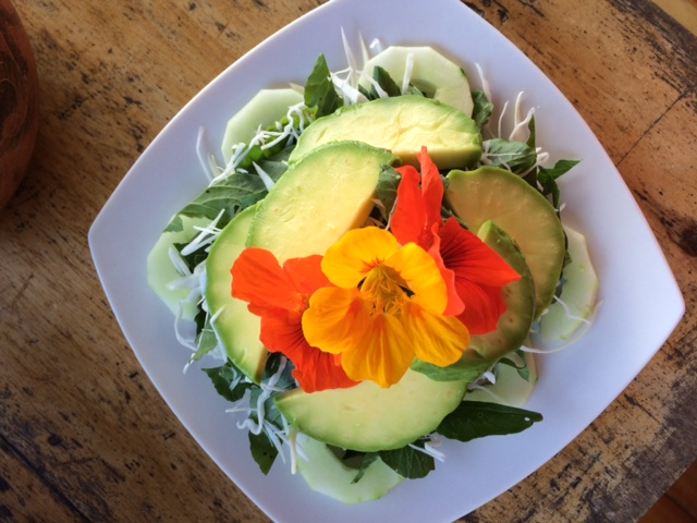 avocado salad with nasturtiums