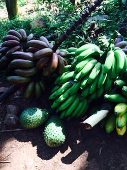 bananas and guanabanas