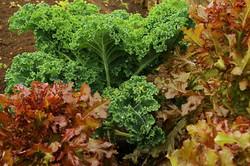 leafy greens JD_edited