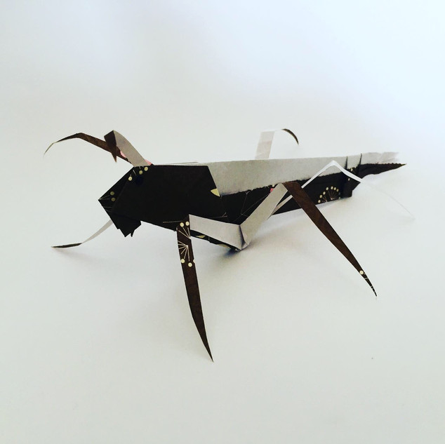Grasshopper. The book shows how to make one with only the back legs. I accidentally made one with 4 legs, so thought that 6 must be doable. And it is.