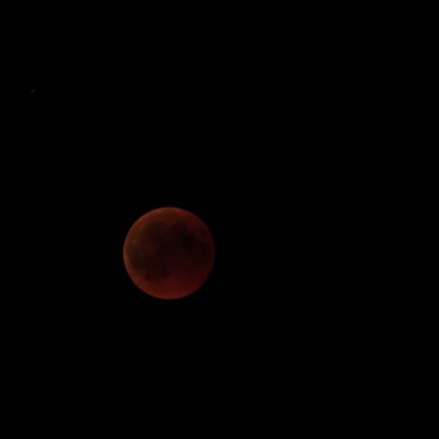 Moon eclipse, Videographer, Timelapse