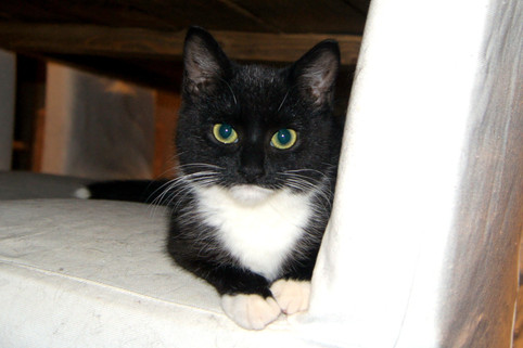 Adopterte katter i januar