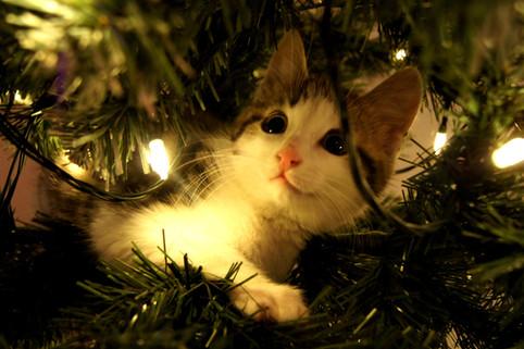 Ta hensyn til pus i julen