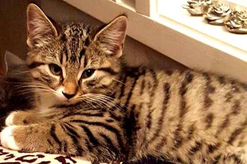 Adopterte katter i desember