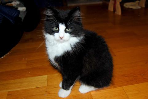 Adoptert: Figaro <3