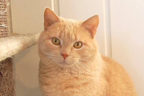 Hva er egentlig en katt?