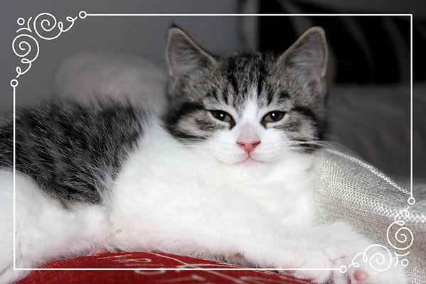 Dette må du vite før du anskaffer deg en katt