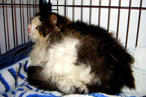 Vranglære er skyld i tusenvis av lidende katteskjebner